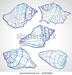 236x246 Art Print Or Poster Of Vintage Seashells 1
