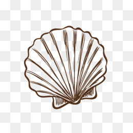 260x260 Free Download Seashell Drawing Illustration