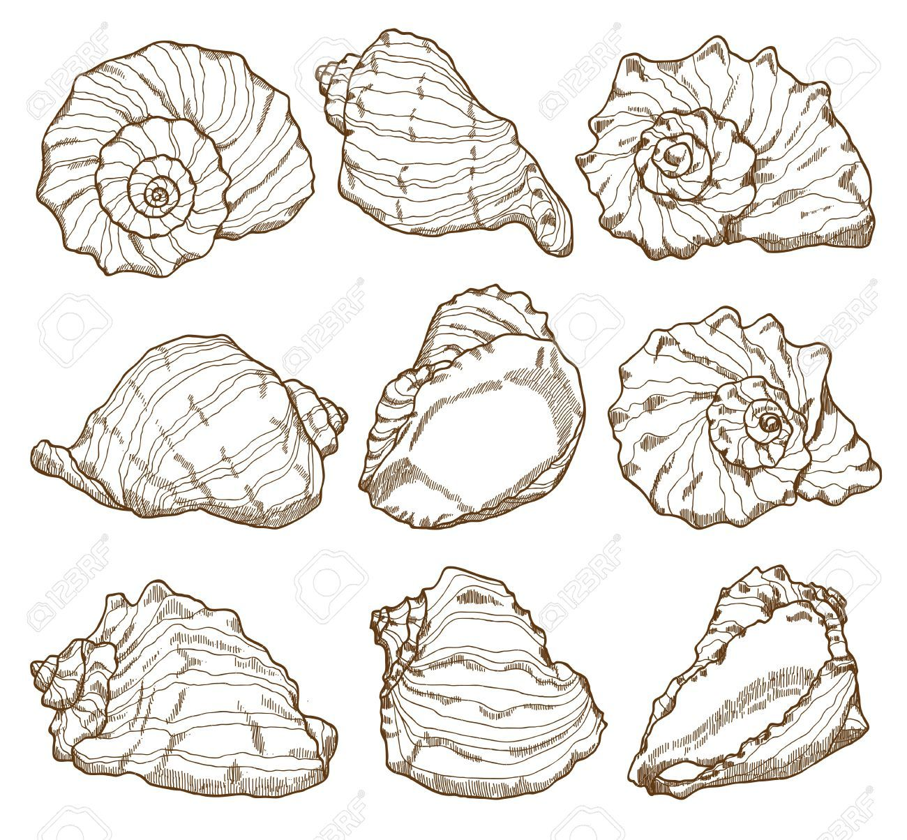 1300x1204 Hand Drawing Seashell Set Isolated On White Royalty Free Cliparts