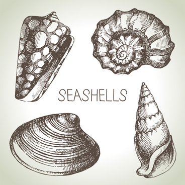 368x368 Seashells Vector Free Vector Download (64 Free Vector)