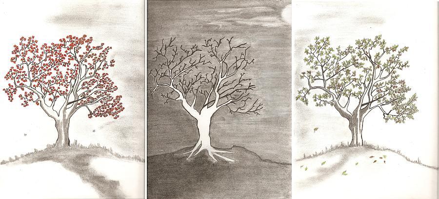 900x408 Tree Seasons Drawing By Salomi Prakash