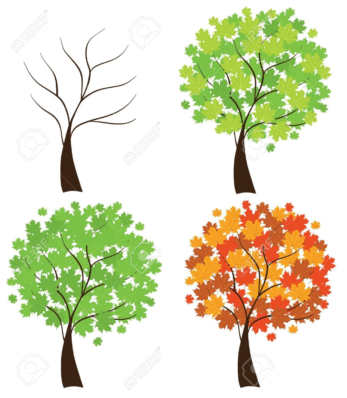 1133x1300 Trees In Different Seasons Four Season Maple Trees Tree Hand