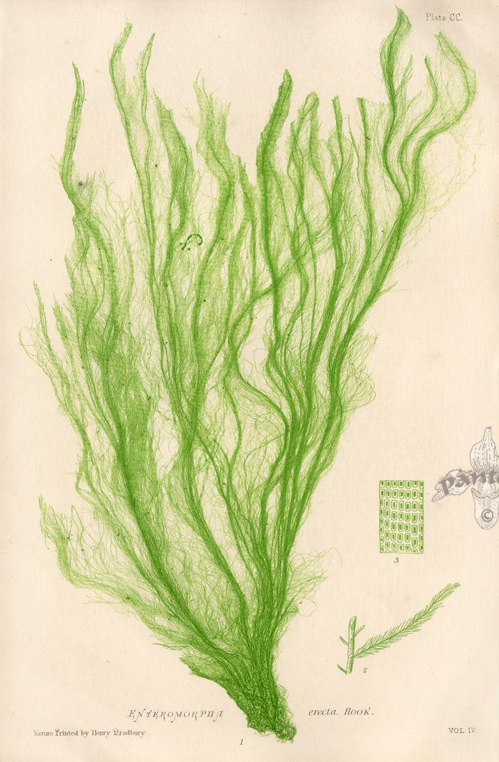 720x1100 Botanical Sketchbook