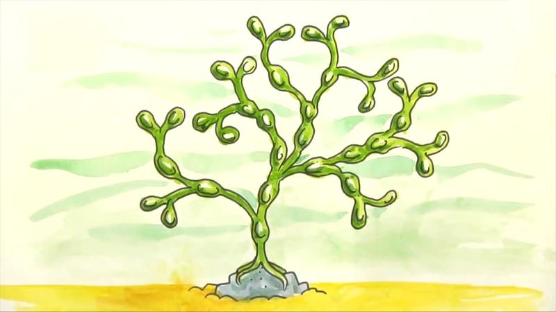 800x450 How To Draw Seaweed