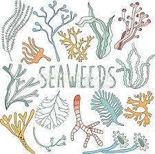 225x224 Image Result For Seaweed Drawing Mermaid Seaweed