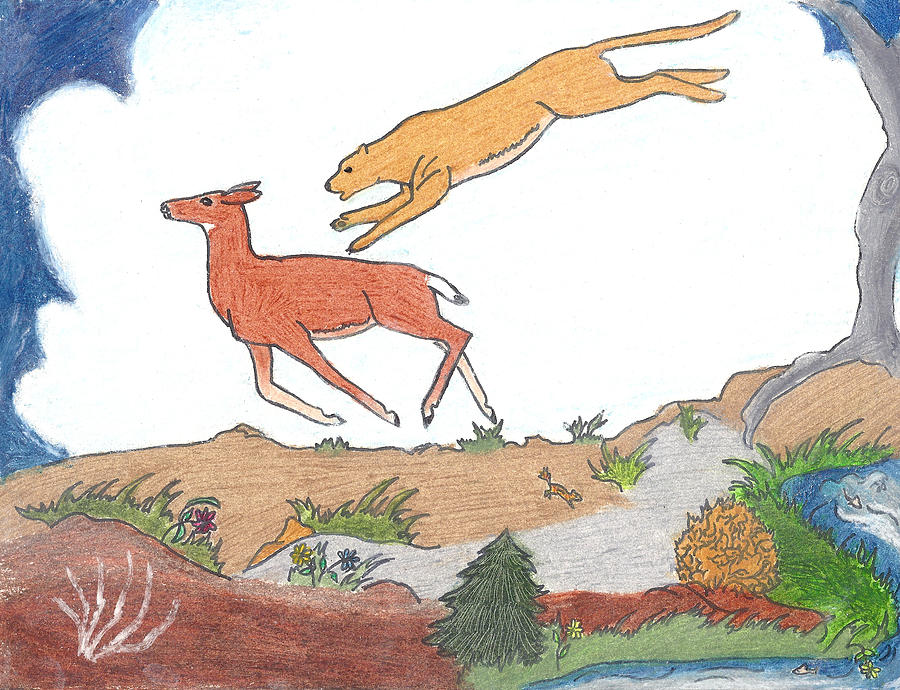 900x690 Childhood Drawing Cougar Attacking Deer Drawing By Dawn Senior Trask