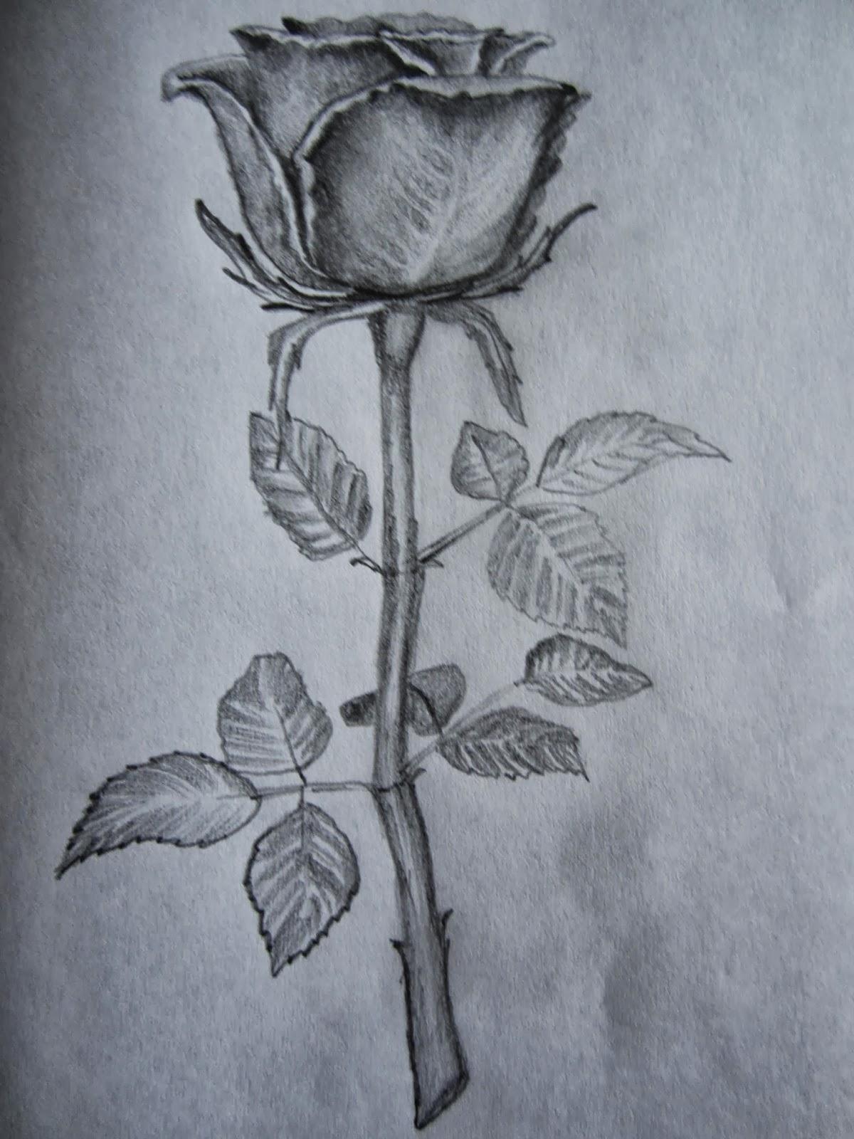Shaded Rose Drawing at GetDrawings | Free download