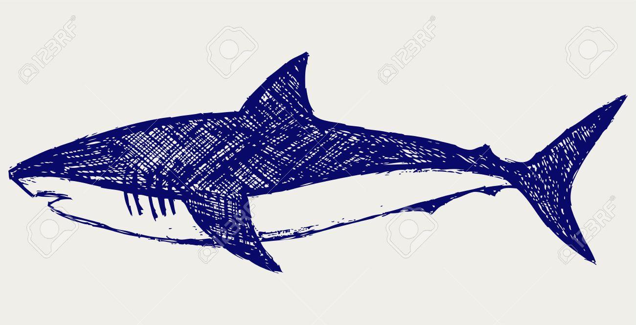 1300x664 15843255 Reef Shark Sketch Stock Vector Shark Cartoon Drawing