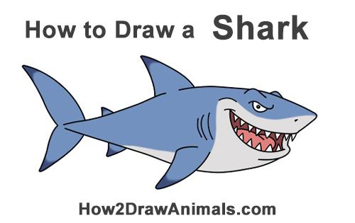 500x315 How To Draw A Shark (Cartoon)