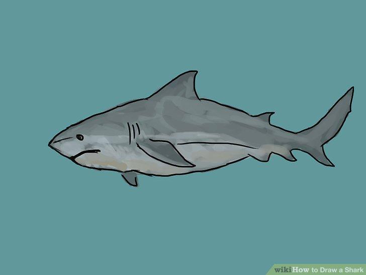 728x546 4 Ways to Draw a Shark