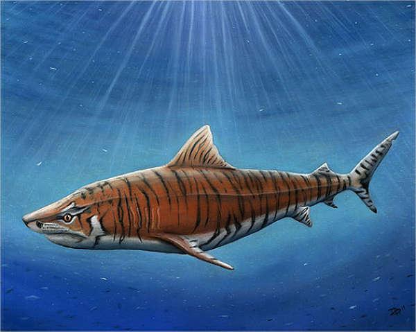 600x479 9+ Shark Drawings
