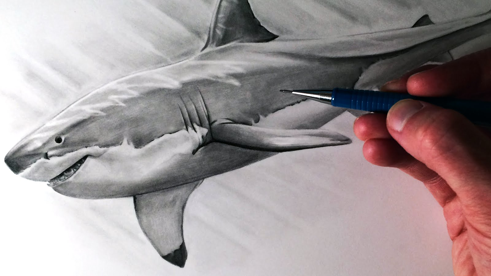 1600x900 How To Draw A Great White Shark
