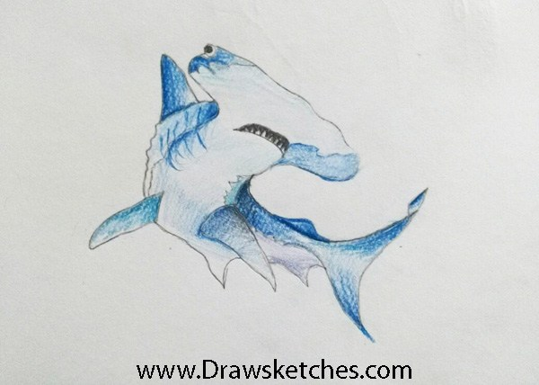 600x428 How To Draw A Hammerhead Shark In A Few Easy Steps With Pictures