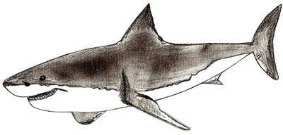 400x192 How To Draw A Shark