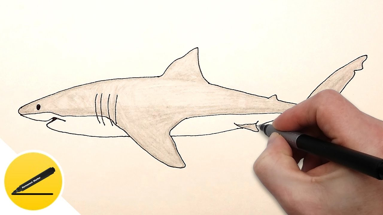1280x720 How To Draw A Shark Step By Step Easy For Beginners