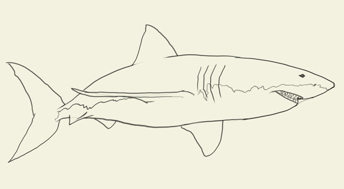 700x384 How To Draw Shark