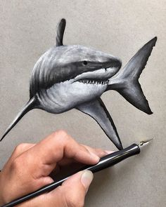 236x295 My Drawing Of A Great White Shark! Time Lapse Video Www.youtube