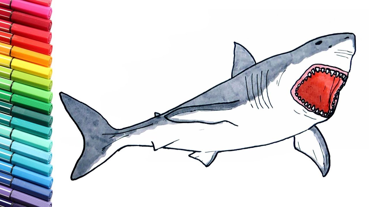 1280x720 Shark Drawing And Coloring Pages For Children