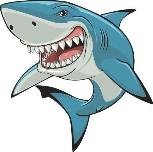 500x497 Cartoon Shark Drawing Reference Shark, Cartoon
