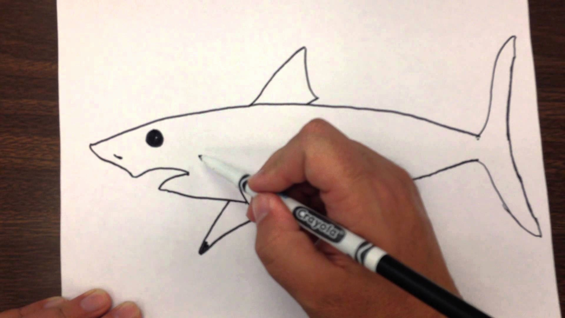 1920x1080 An Easy Drawing Luxury Great White Shark Clipart Easy Draw Pencil