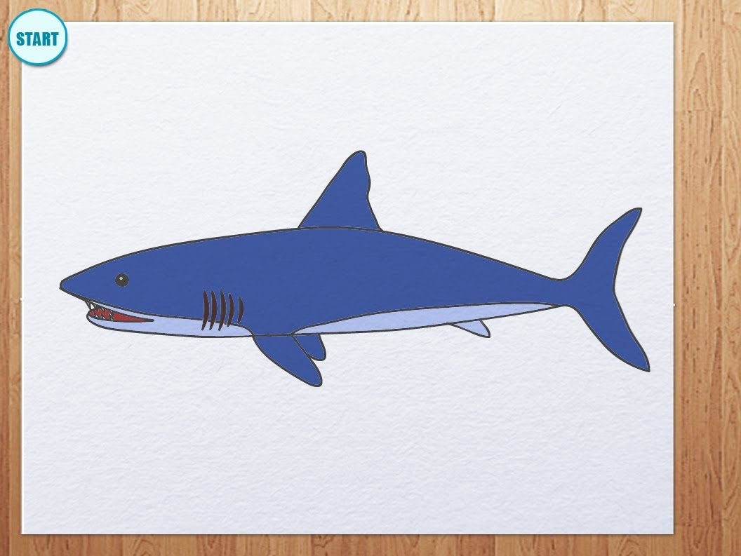 1056x793 How To Draw Shark