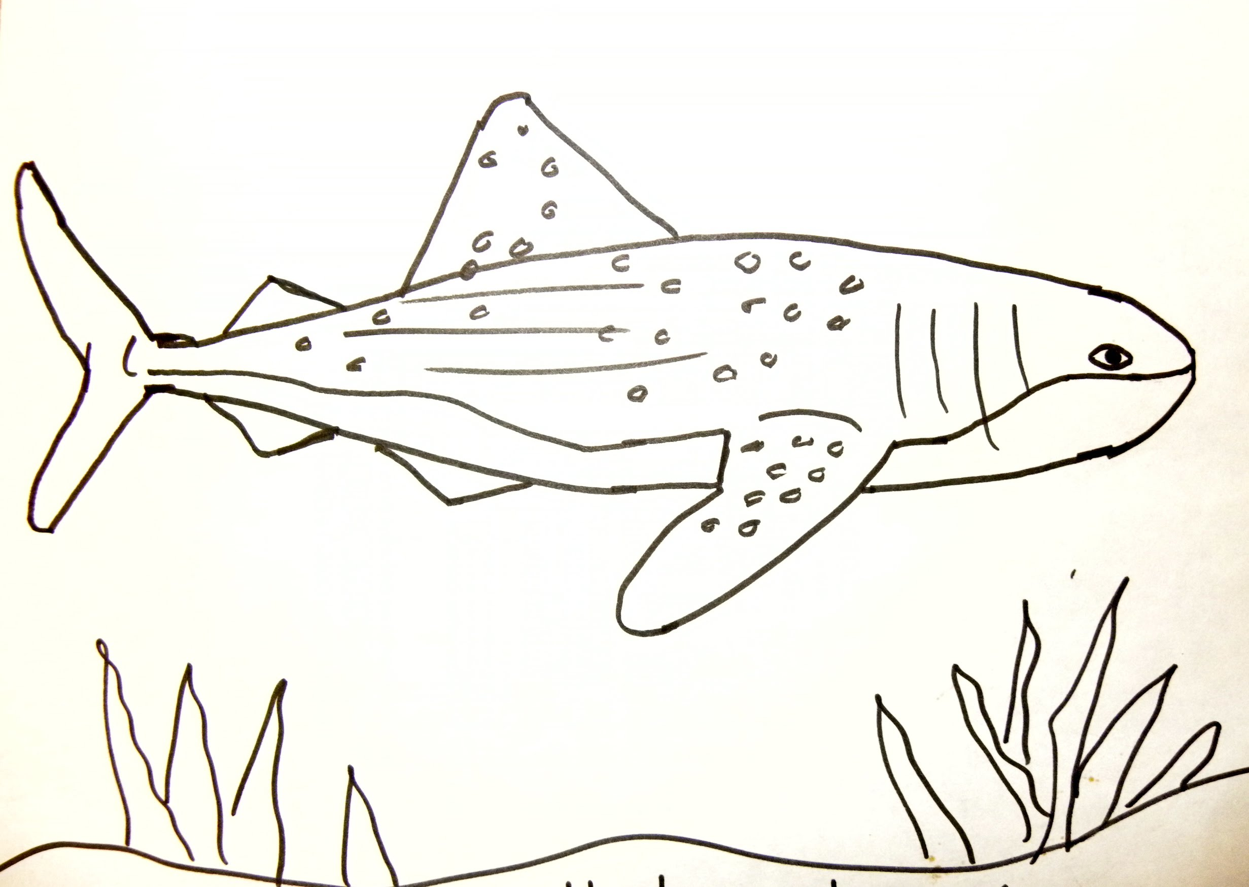 2462x1749 Kids Can Draw Whale Shark