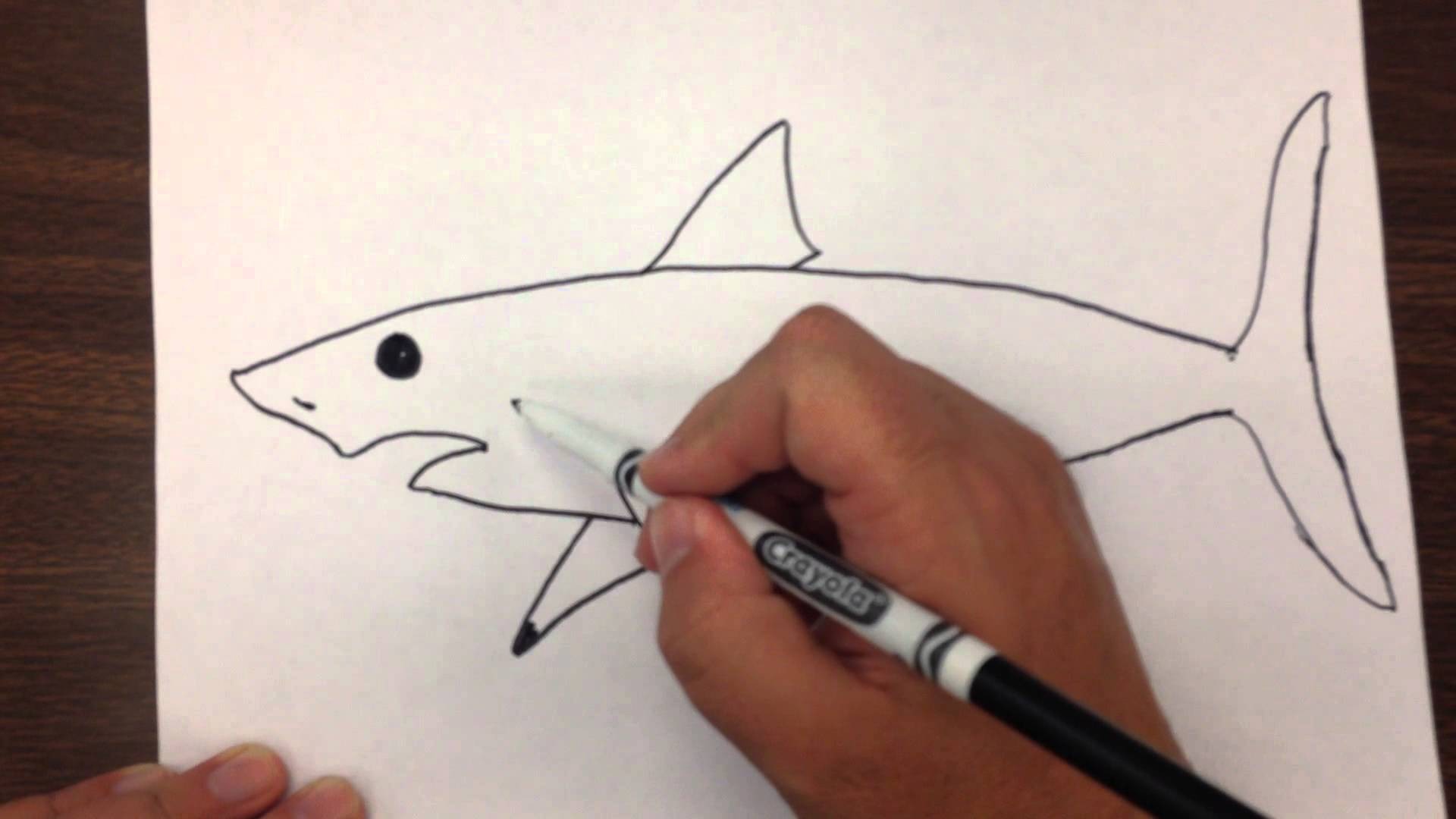 1920x1080 How To Draw A Great White Shark Step By Step