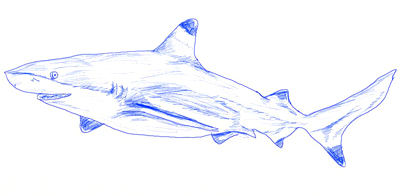400x196 How To Draw A Realistic Shark