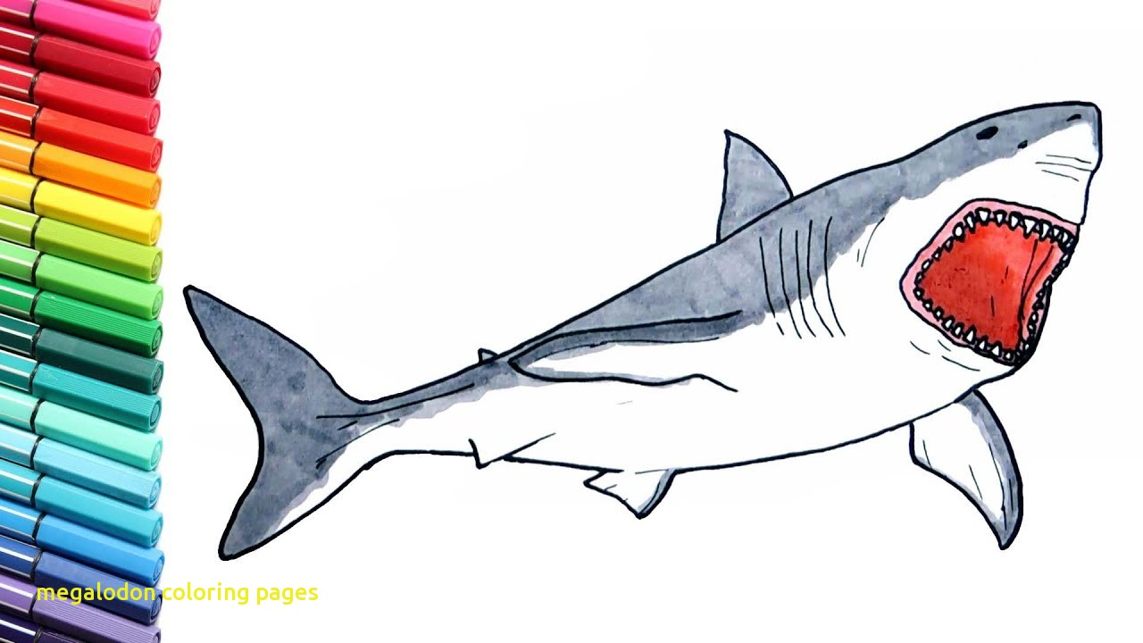 1280x720 Megalodon Coloring Pages With Shark Drawing And Coloring Pages