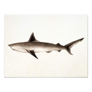 324x324 Shark Drawing Art Amp Framed Artwork Zazzle