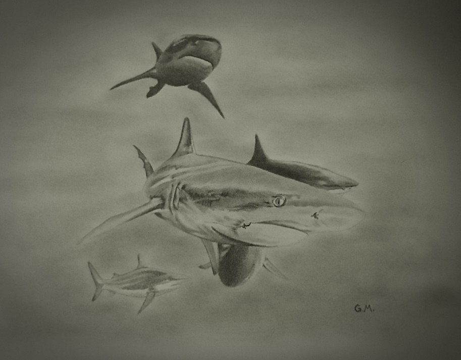 913x714 Drawing Of Swarm Of Sharks. Pencil. Freehand, Based On