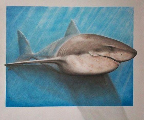 563x472 Easy 3d Drawings With Pencil Shark Pencil Drawing Hard Art