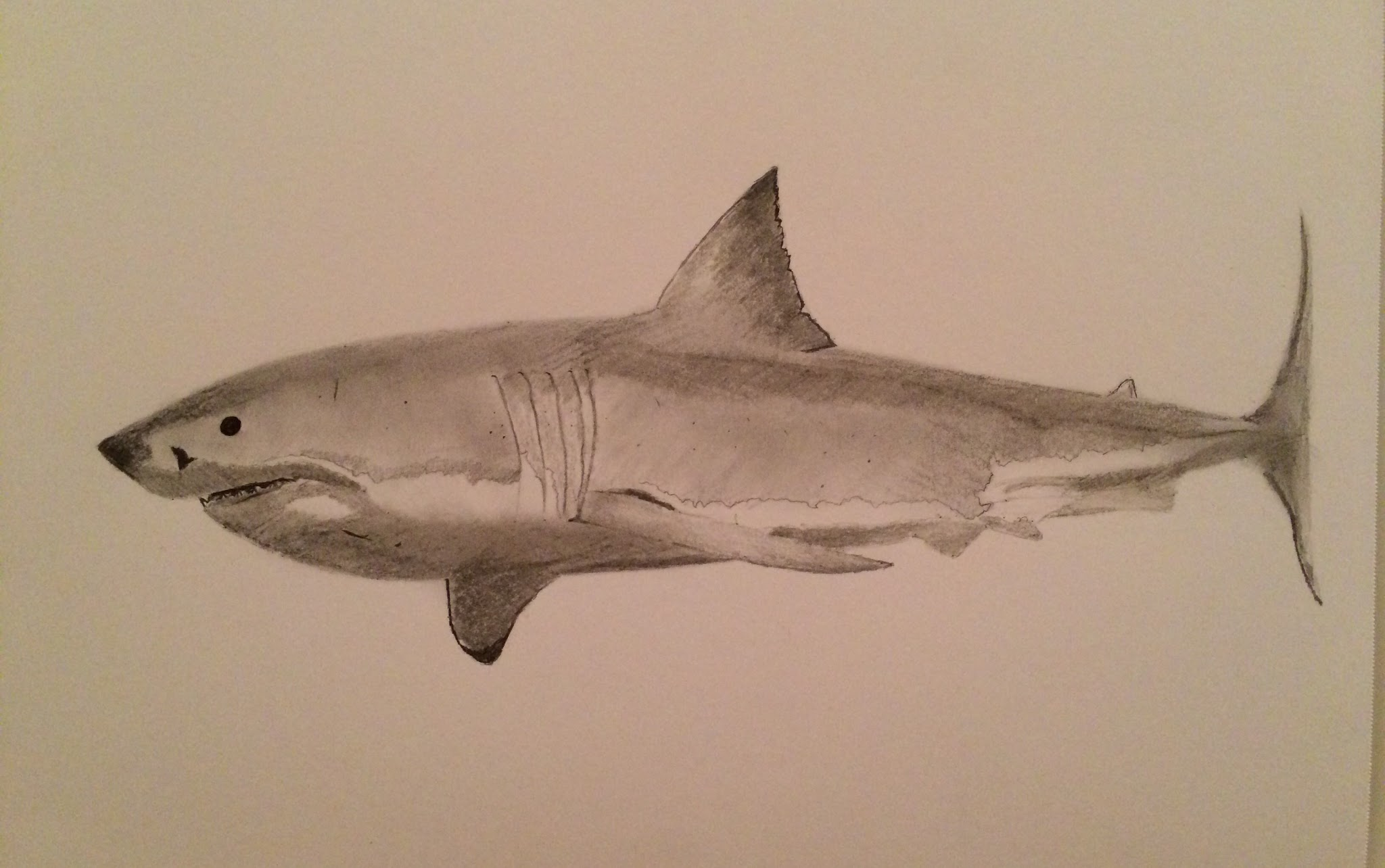 2048x1284 Great White Shark By Paul Hill