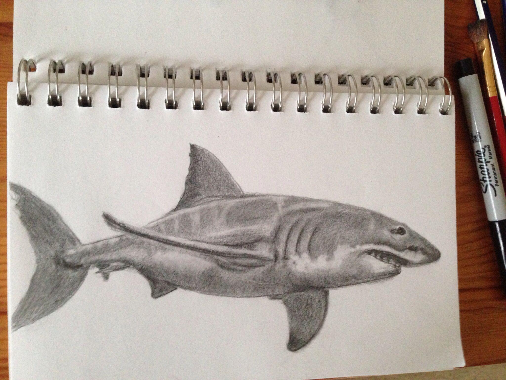 2048x1536 Shark Pencil Drawing Artwork Artwork