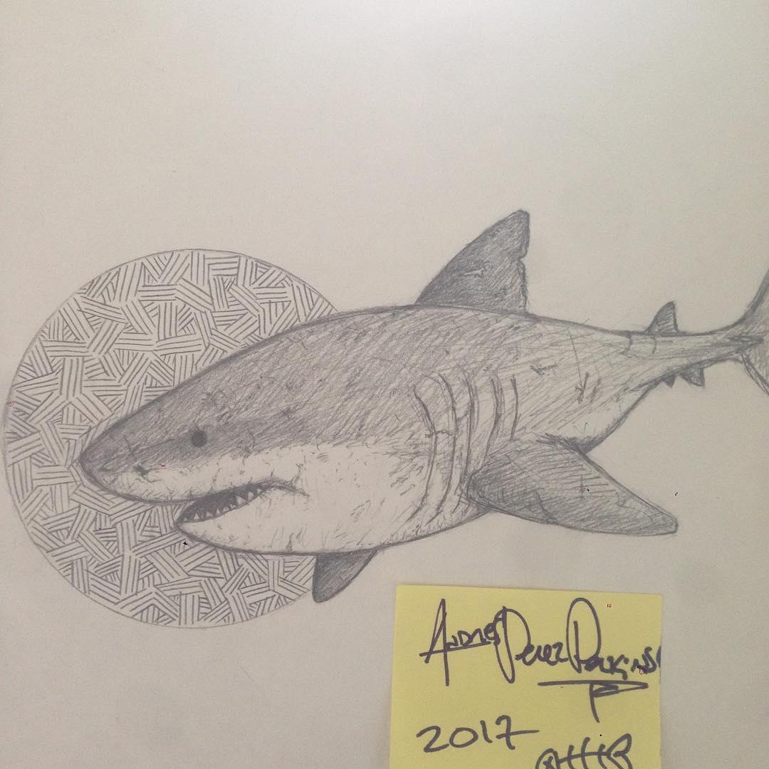 1080x1080 Shark Pencil Drawing On Instagram