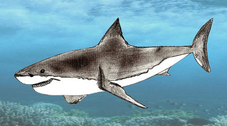 450x250 How To Draw A Shark