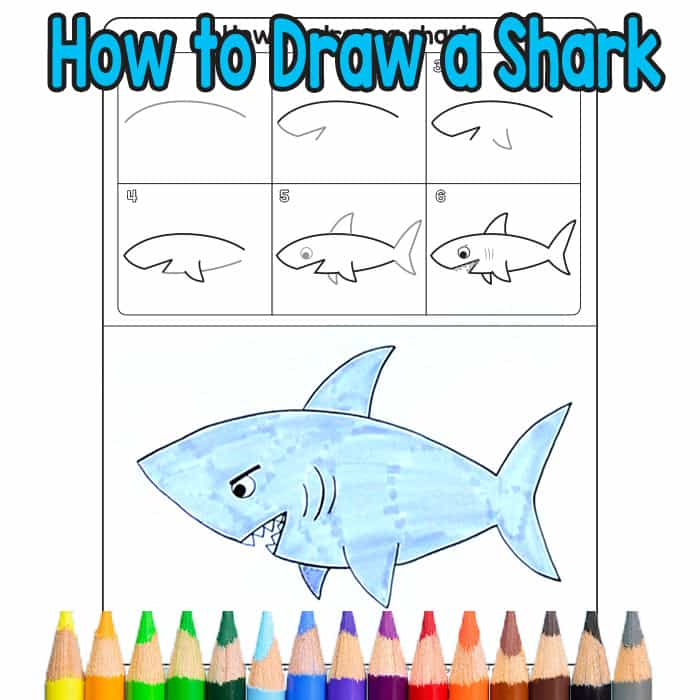 700x700 How To Draw A Shark