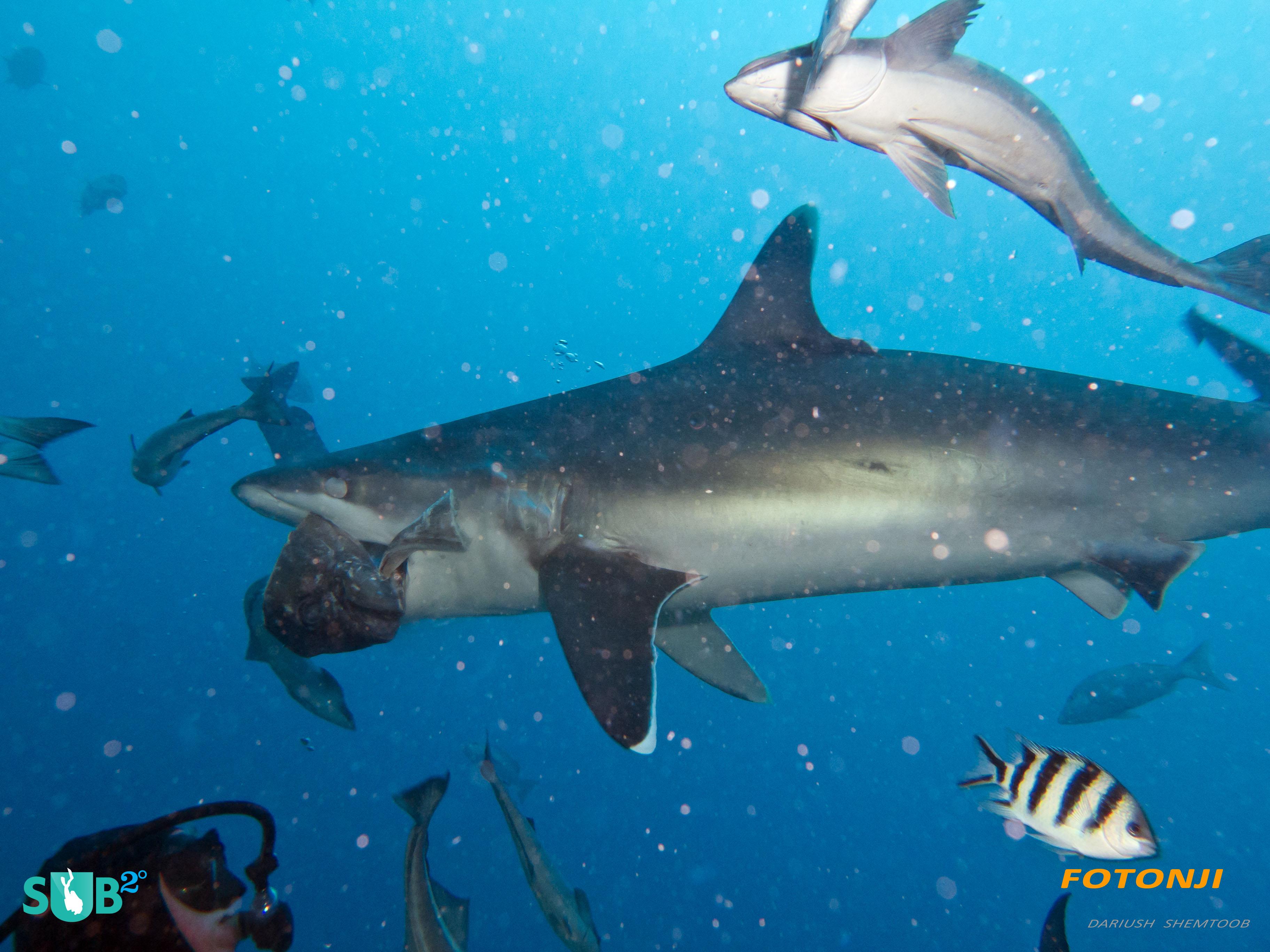 3648x2736 Wrangler Drawing Shark Closer