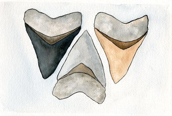 570x384 Shark Tooth Art