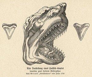 300x252 Shark Tooth Drawings Fine Art America