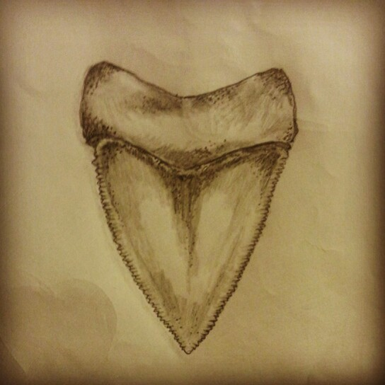 544x544 Great White Shark Tooth Tattoo Sketch By