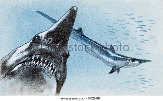 640x398 Shark Teeth Drawing Stock Photos Amp Shark Teeth Drawing Stock