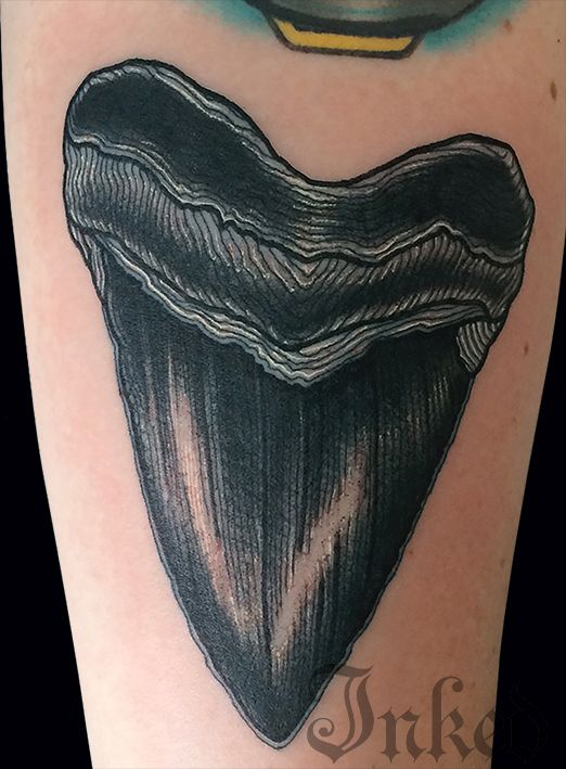 522x709 Shark Tooth Bampw Tattoo Therapy Shark Tooth Tattoo
