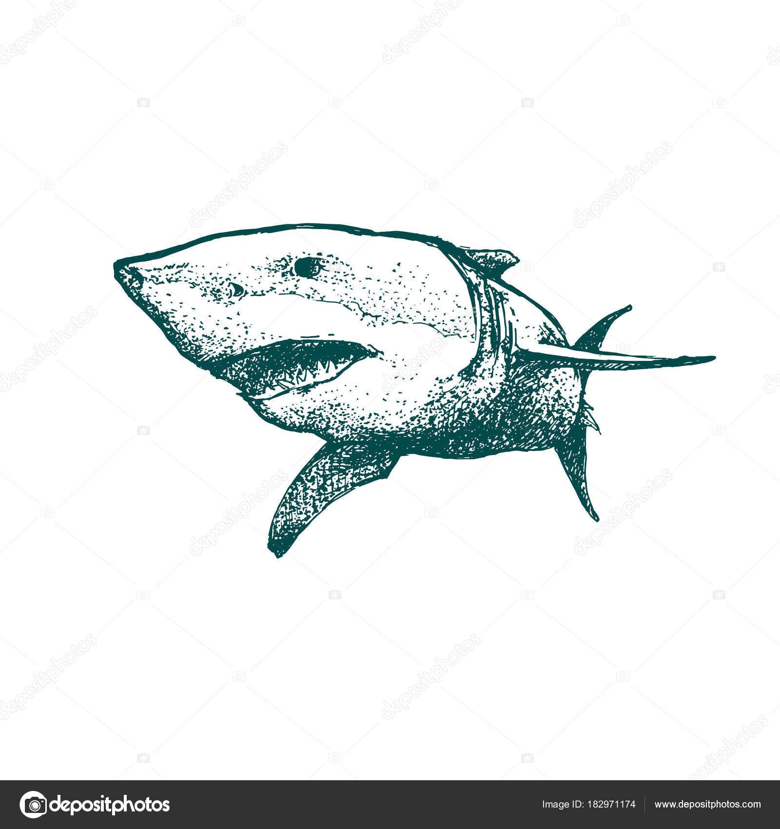 1600x1700 Beautiful Hand Drawn Shark Open Mouth Monochrome Illustration