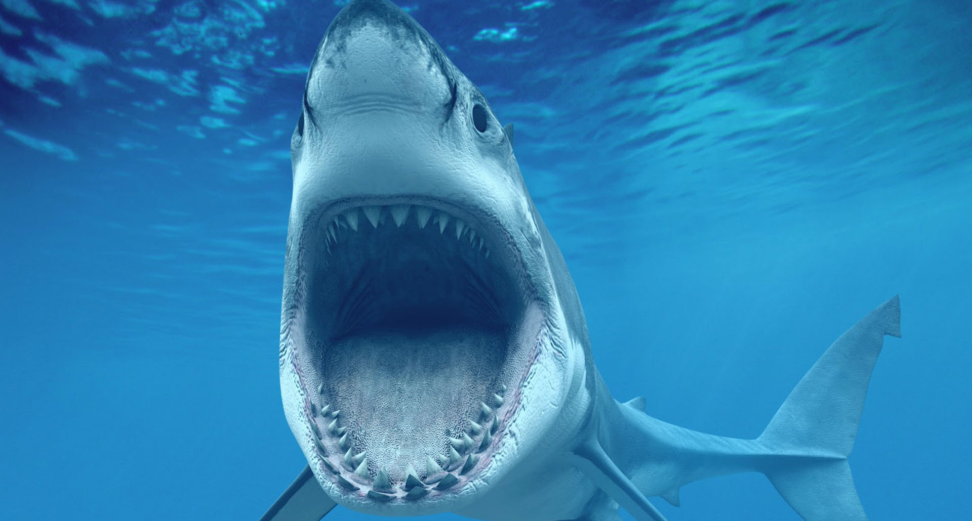 1920x1030 Great White Shark Picture Mouth Open Showing Teeth Hd Wallpaper