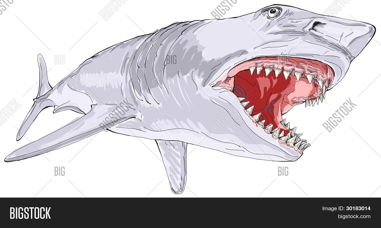 1500x899 Shark Open Mouth