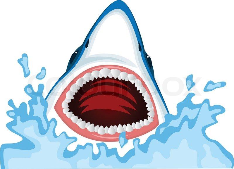 800x578 Shark Open Mouth Illustration, Shark Vector Stock Vector Colourbox