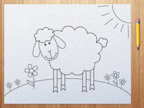 480x360 How To Draw A Sheep