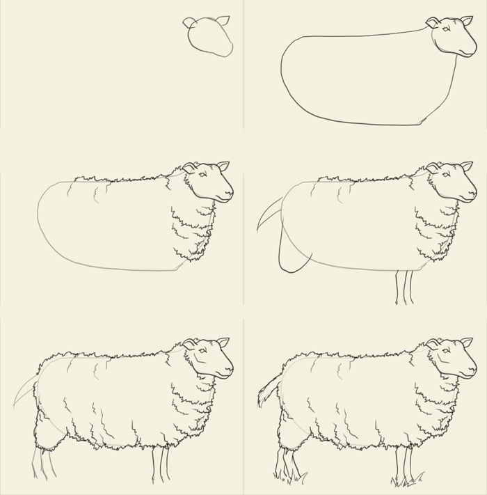 700x711 How To Draw Sheep Fartsy Drawings, Animal And Sketches