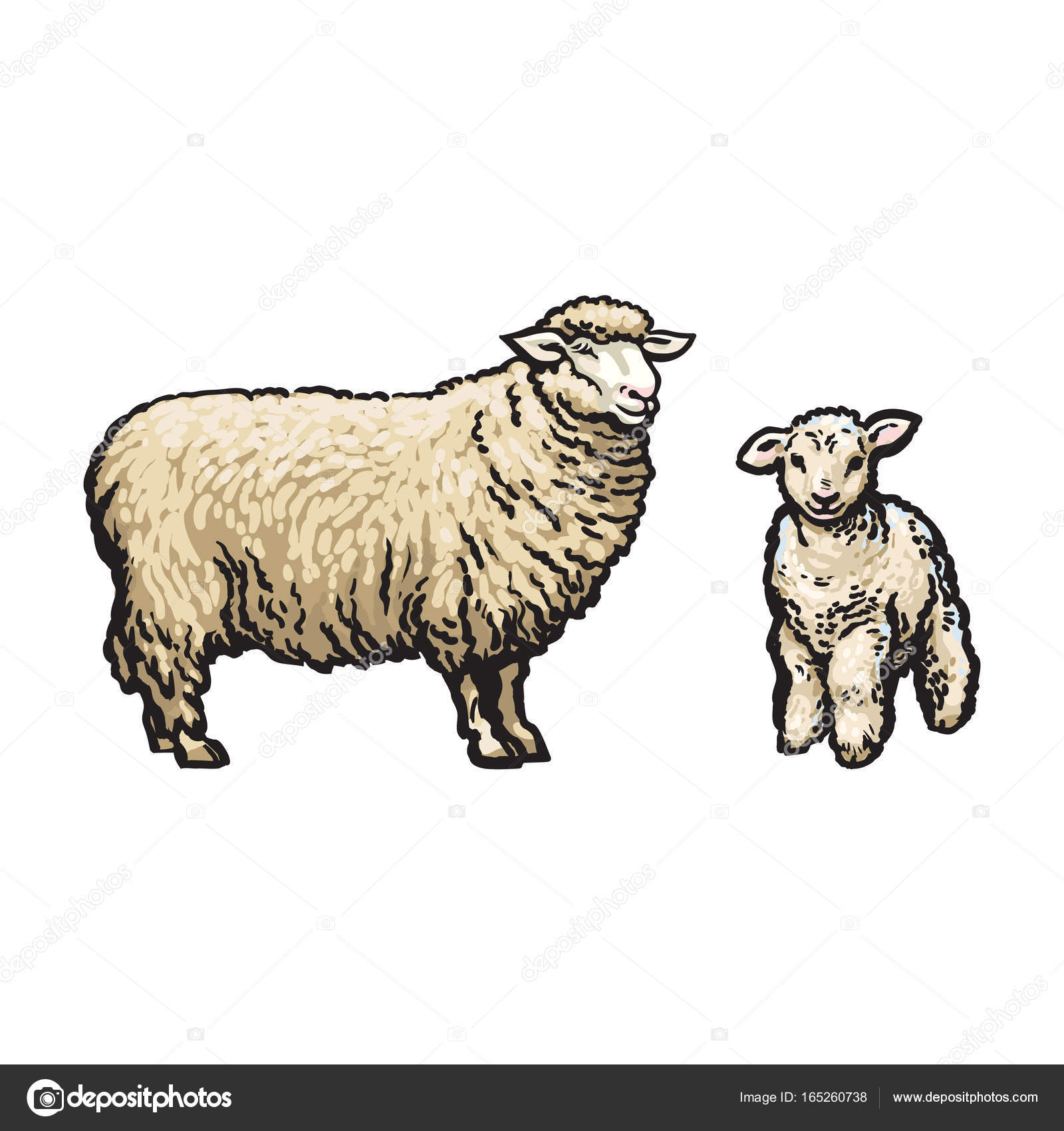 1600x1700 Vector Sketch Cartoon Style Sheep And Lamb Set Stock Vector